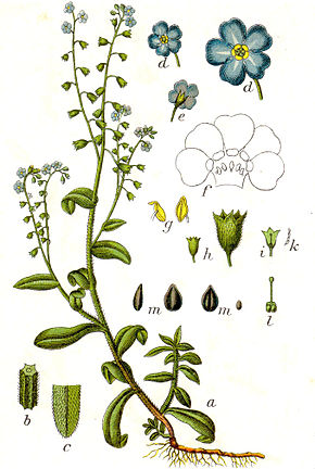 feuille de weed dessin